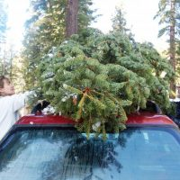 Viete správne prevážať vianočný stromček?